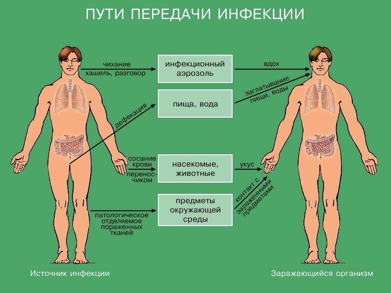 профилактика инфекционных заболеваний доклад