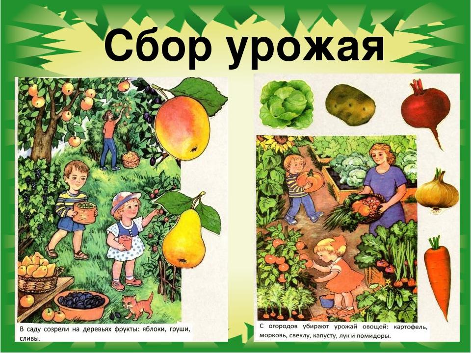 люблю сюжетные картинки овощи самых неприятных ситуаций