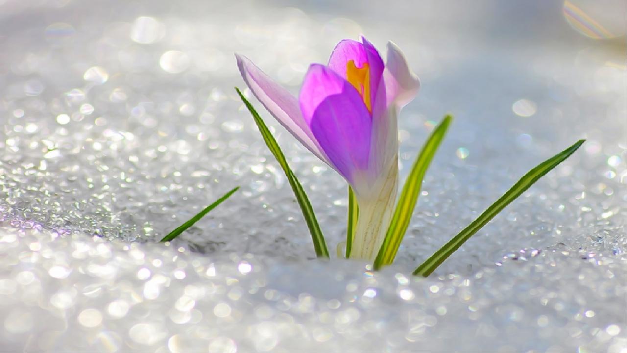 Весна привет картинки красивые