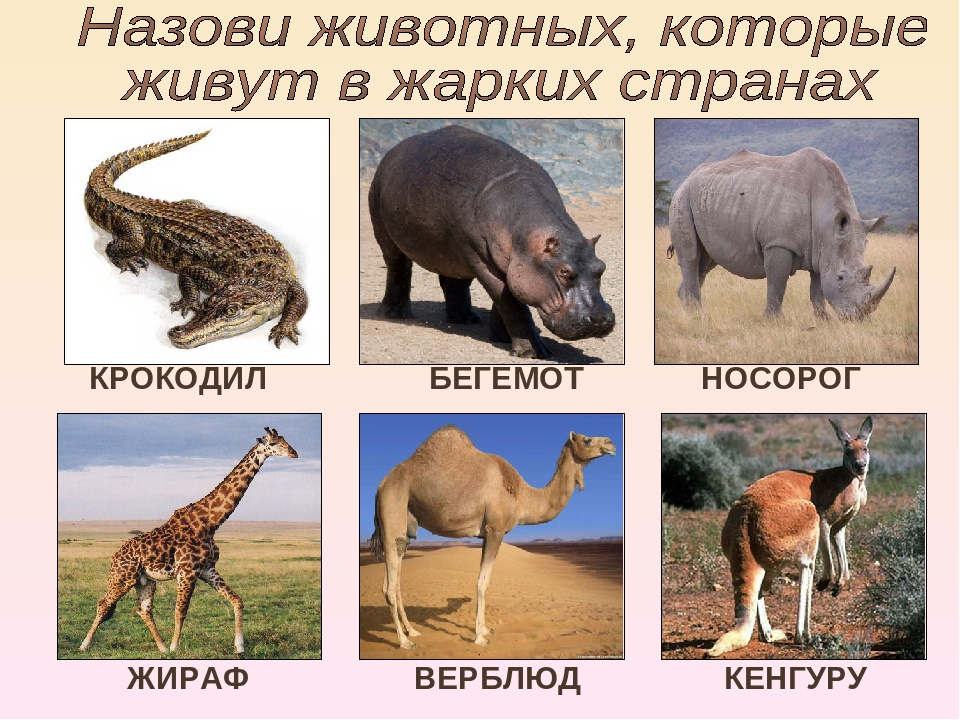 КРОКОДИЛ БЕГЕМОТ НОСОРОГ КЕНГУРУ ЖИРАФ ВЕРБЛЮД