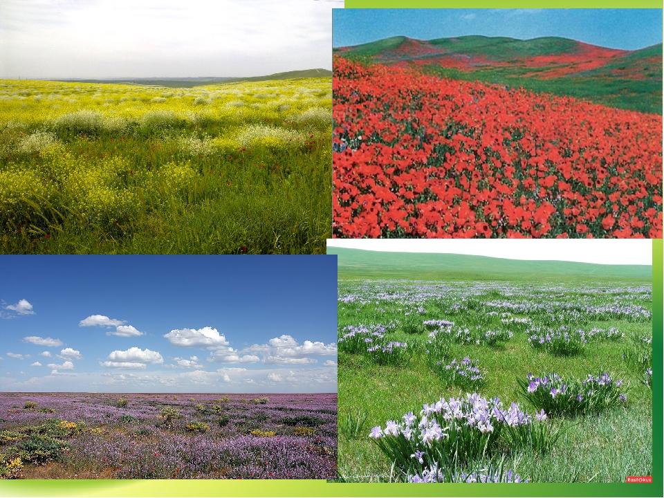 оно природные зоны россии степи имеет великолепный