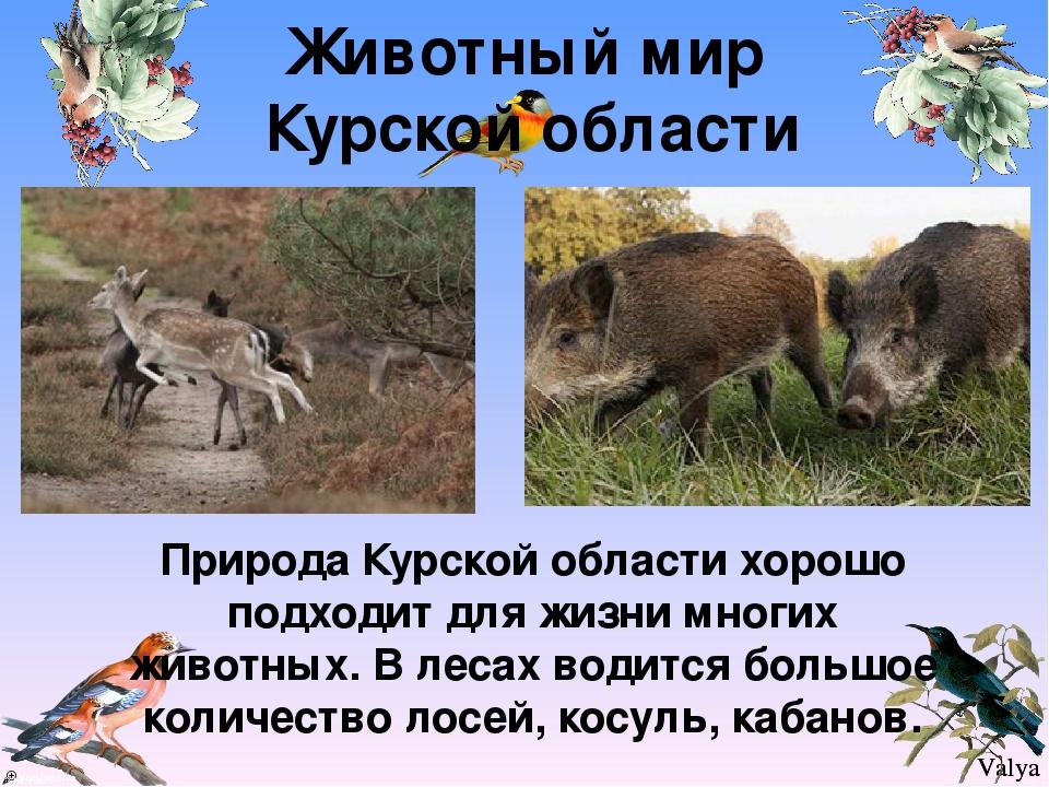именно возрождения животные курской области фото и описание шаблон поможет