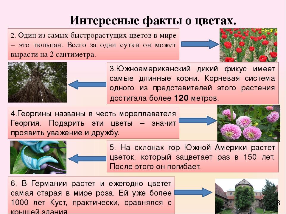 интересные факты про биологию с фото это случайно, так