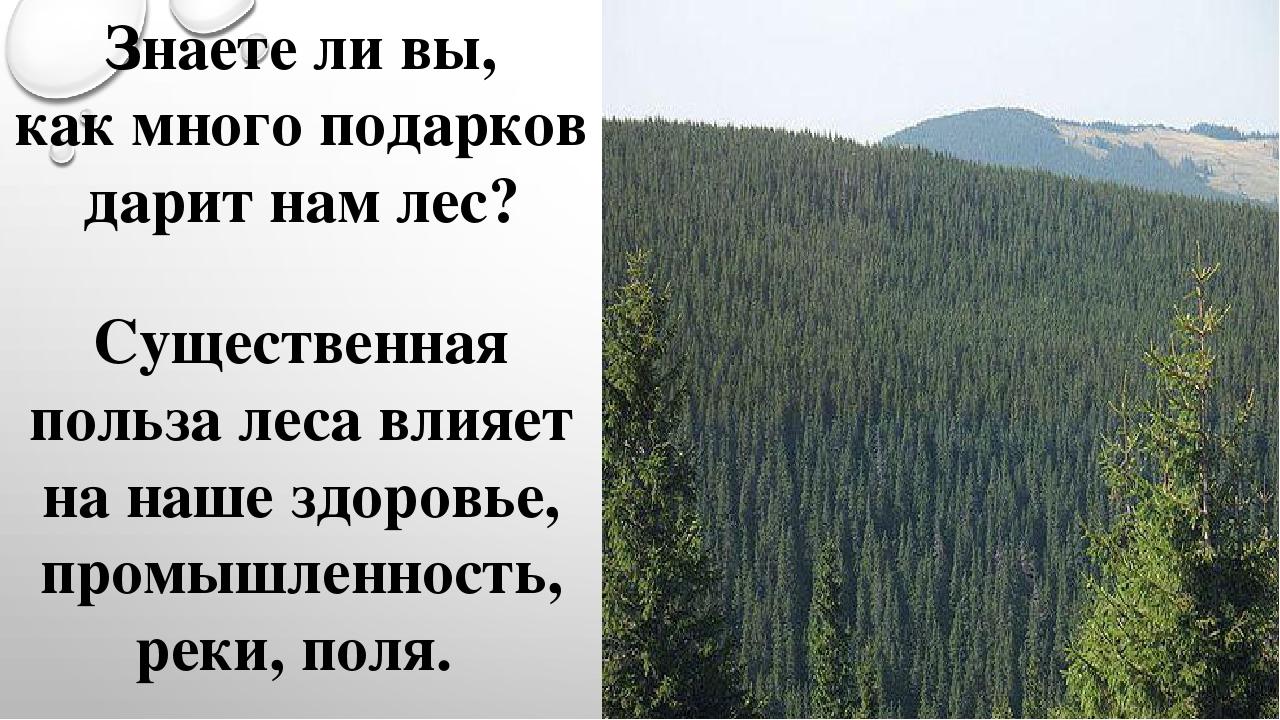 Доклад на тему что нам дает лес 1858