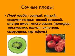 Сочные плоды: Плод ягода - сочный, мягкий, снаружи покрыт тонкой кожицей, вну