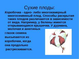 Сухие плоды: Коробочка - одно- либо многокамерный многосемянный плод. Способы