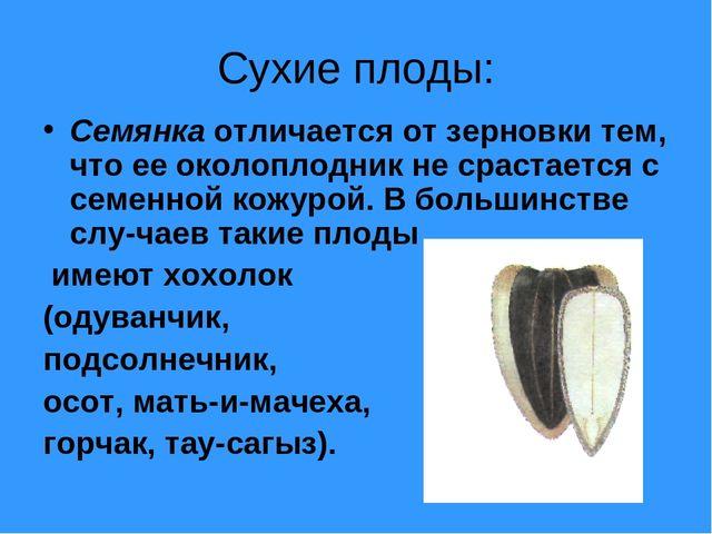 Сухие плоды: Семянка отличается от зерновки тем, что ее околоплодник не сраст...