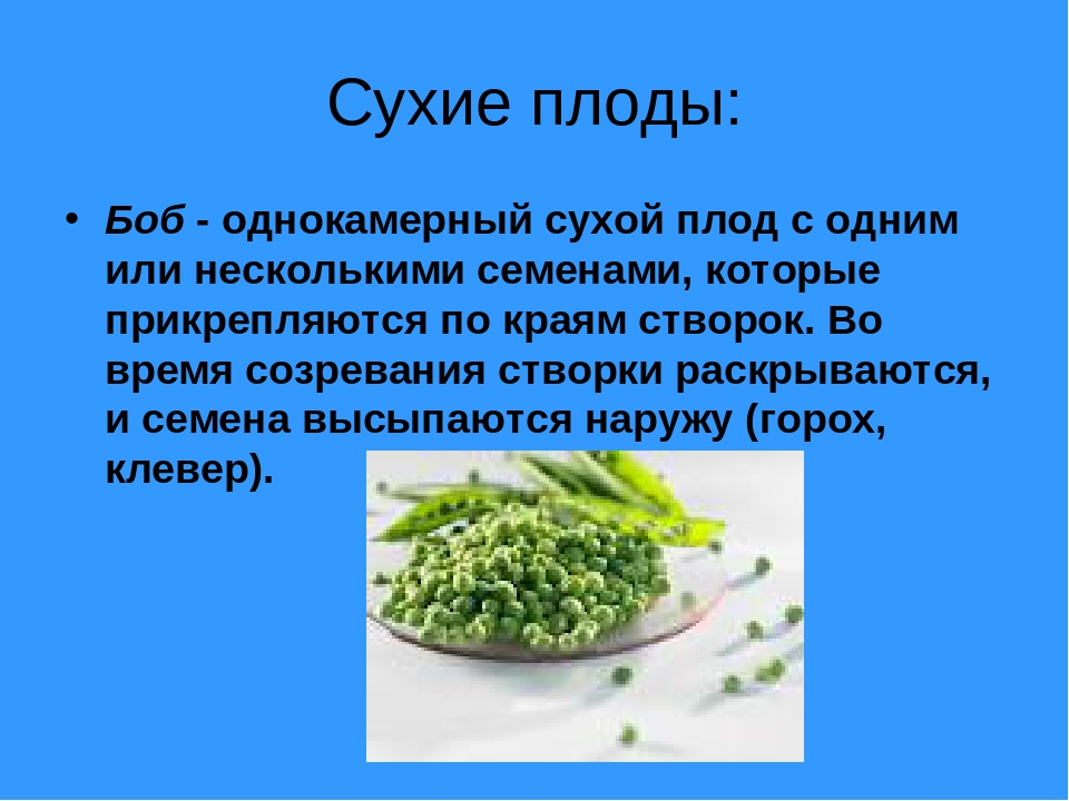Сухие плоды: Боб - однокамерный сухой плод с одним или несколькими семенами,...