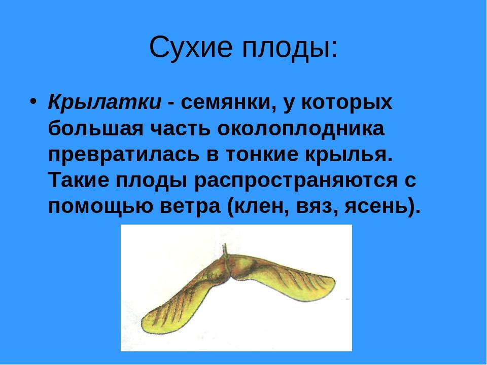 Сухие плоды: Крылатки - семянки, у которых большая часть околоплодника превра...