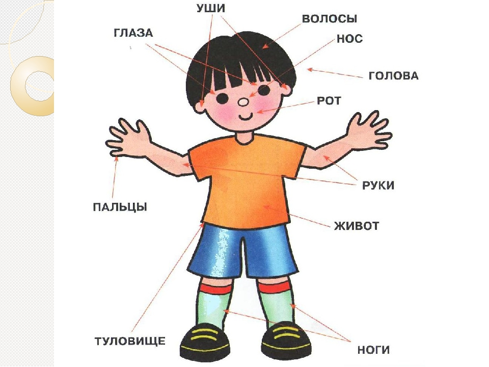 Картинка человека в полный рост для детей части тела