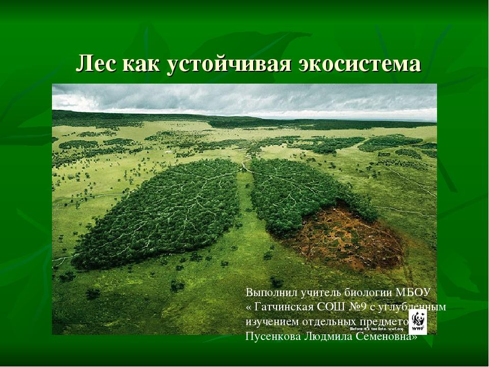 Лес как устойчивая экосистема Выполнил учитель биологии МБОУ « Гатчинская СОШ...