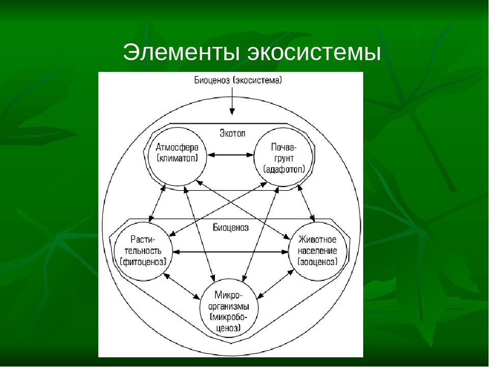 Элементы экосистемы