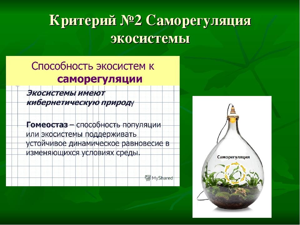 Критерий №2 Саморегуляция экосистемы