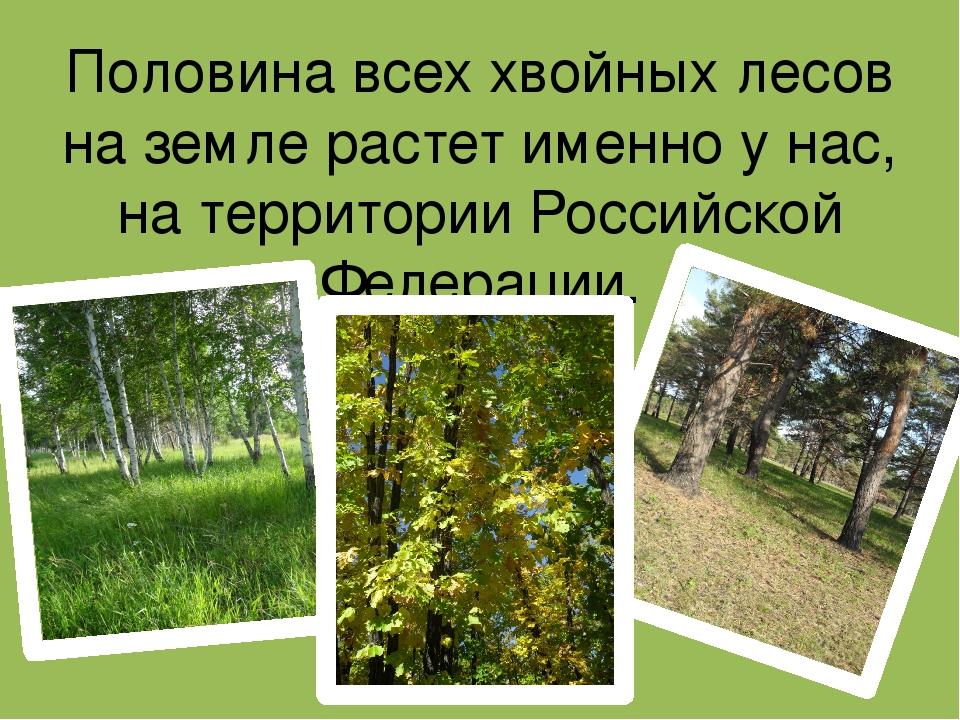 Половина всех хвойных лесов на земле растет именно у нас, на территории Росси...