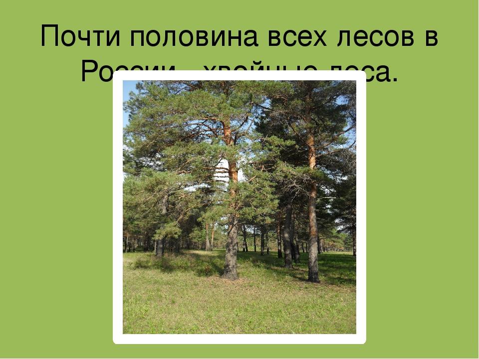 Почти половина всех лесов в России - хвойные леса.