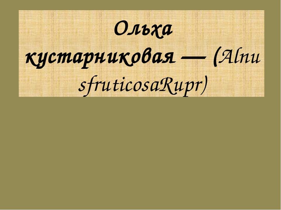 Ольха кустарниковая—(AlnusfruticosaRupr)