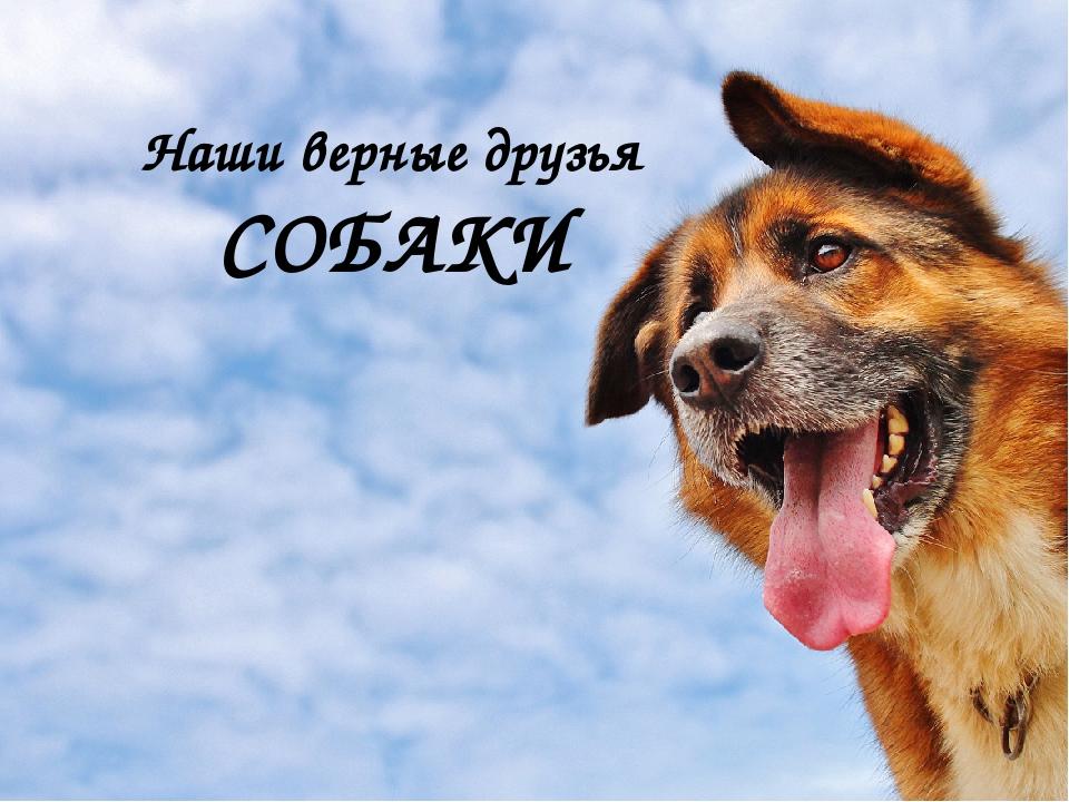 фотограф собаки наши верные друзья картинки кана