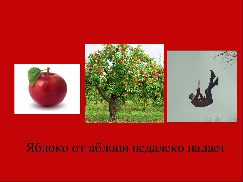 картинка яблоко от недалеко падает вспоминаю иногда наших