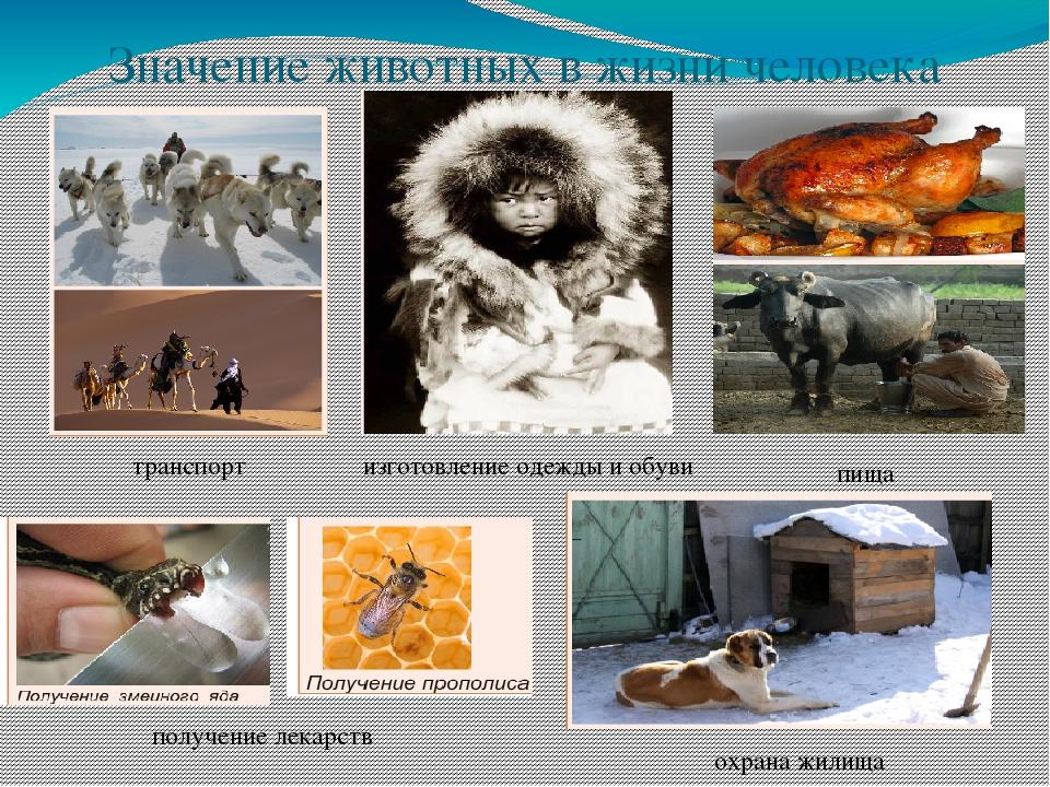 Значения животных картинка