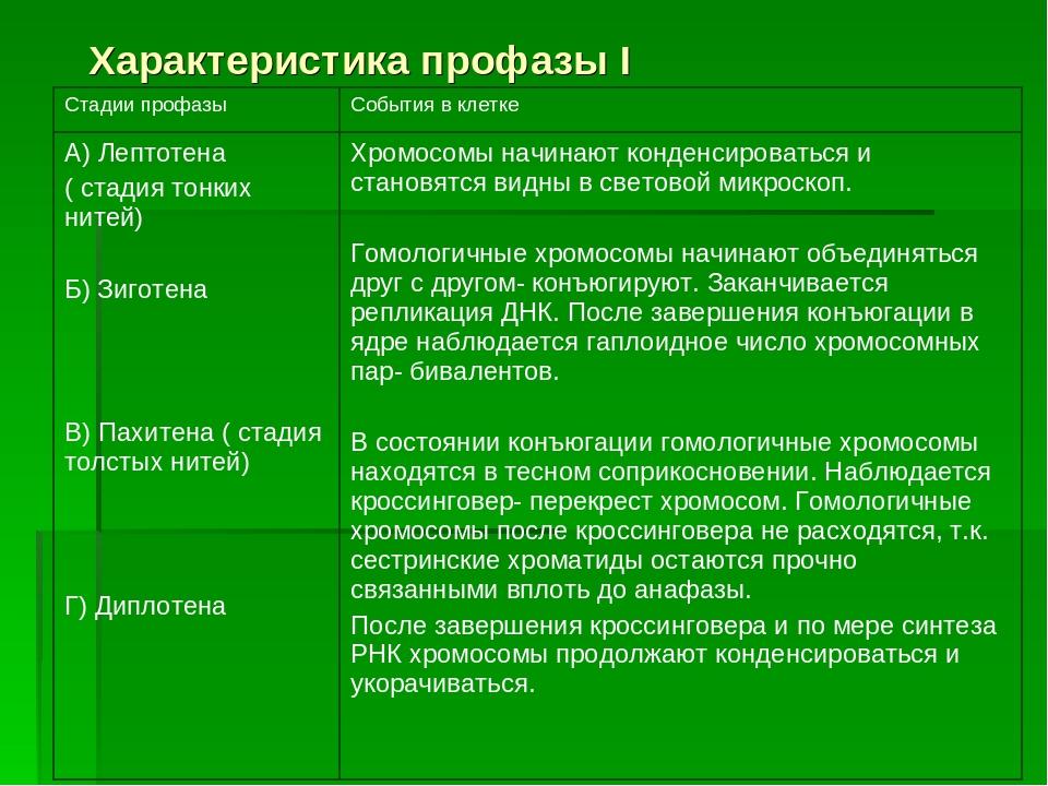 Характеристика профазы I Стадии профазыСобытия в клетке А) Лептотена ( стади...