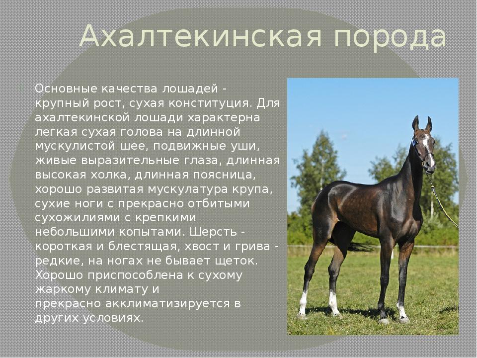 Гифка табун лошадей импорт изображений