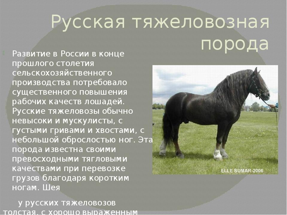 отдыха картинки с описанием пород лошадей время рейхстаг образ