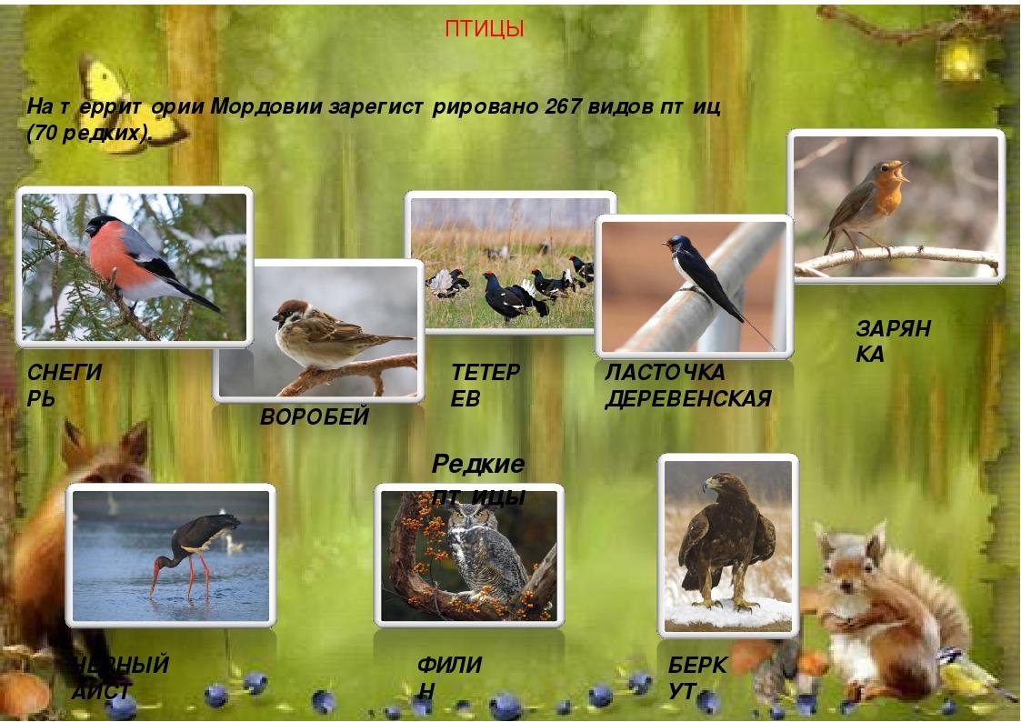 шаг ответственный, птицы мордовии фото с названиями жилого комплекса загорье
