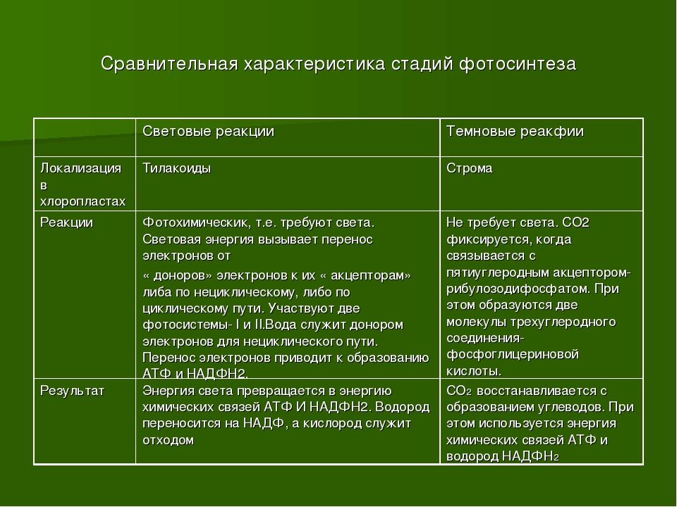 Сравнительная характеристика стадий фотосинтеза