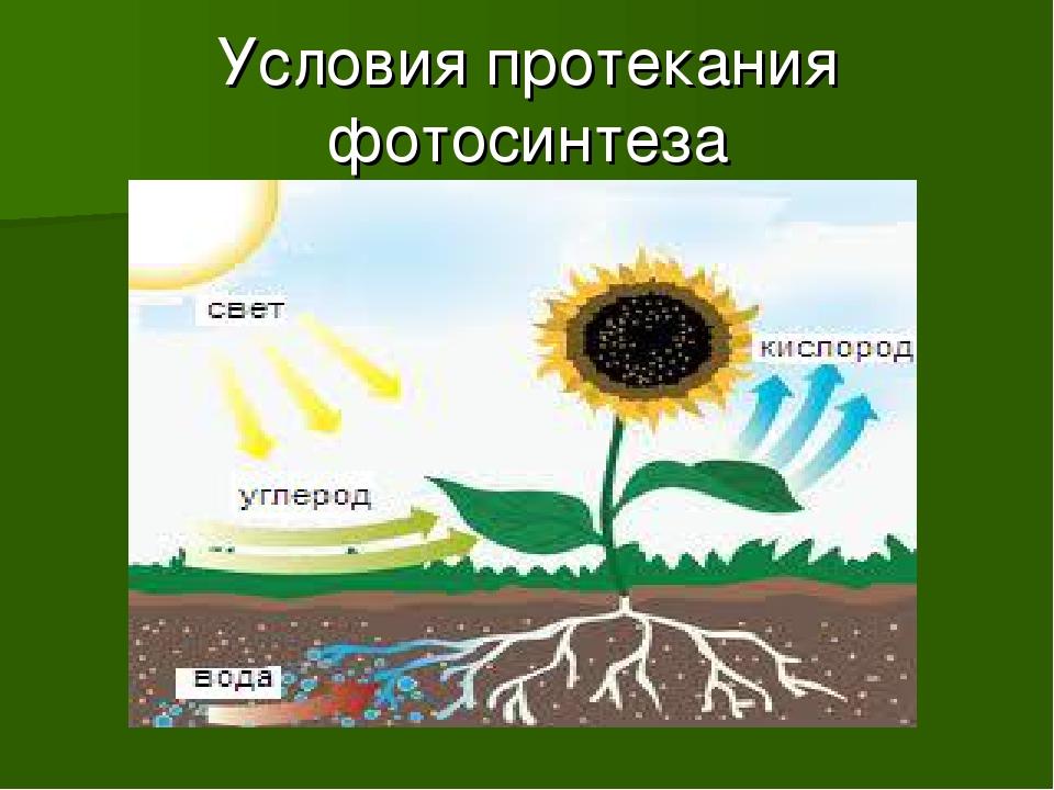 Условия протекания фотосинтеза