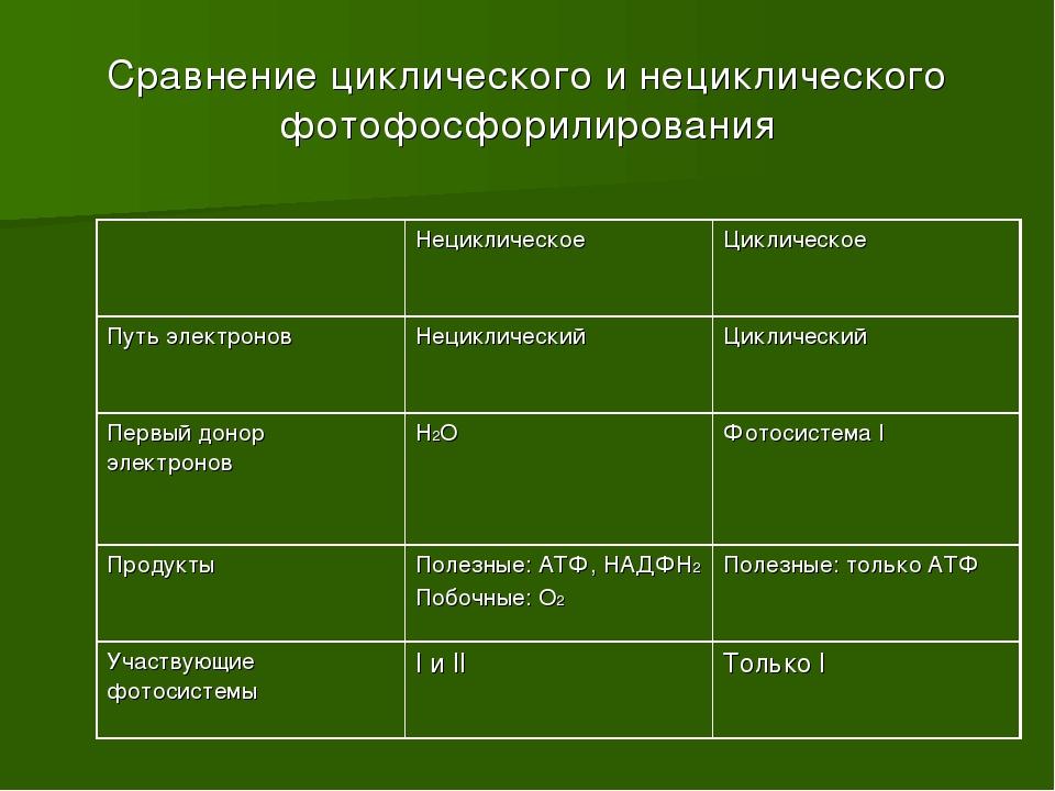 Сравнение циклического и нециклического фотофосфорилирования