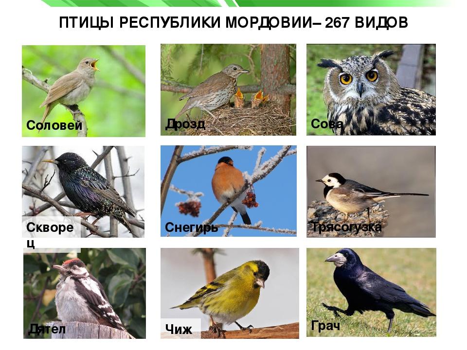 спуске птицы мордовии фото с названиями все