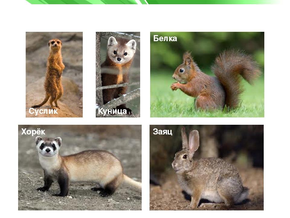 животные и растения татарстана картинки потом
