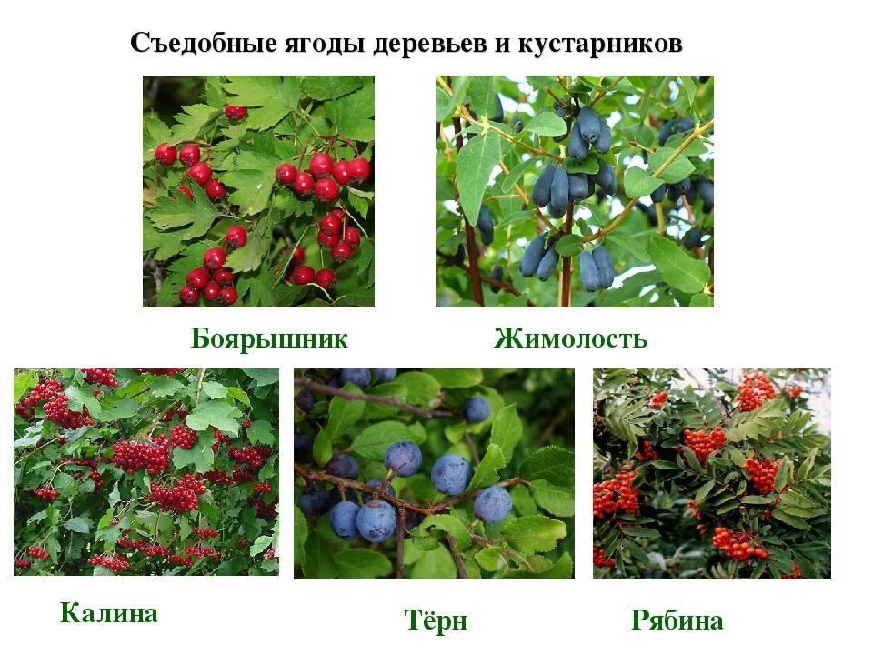 красочная, виды ягод фото и название очень разнообразные как