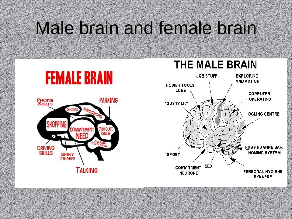 Male brain and female brain
