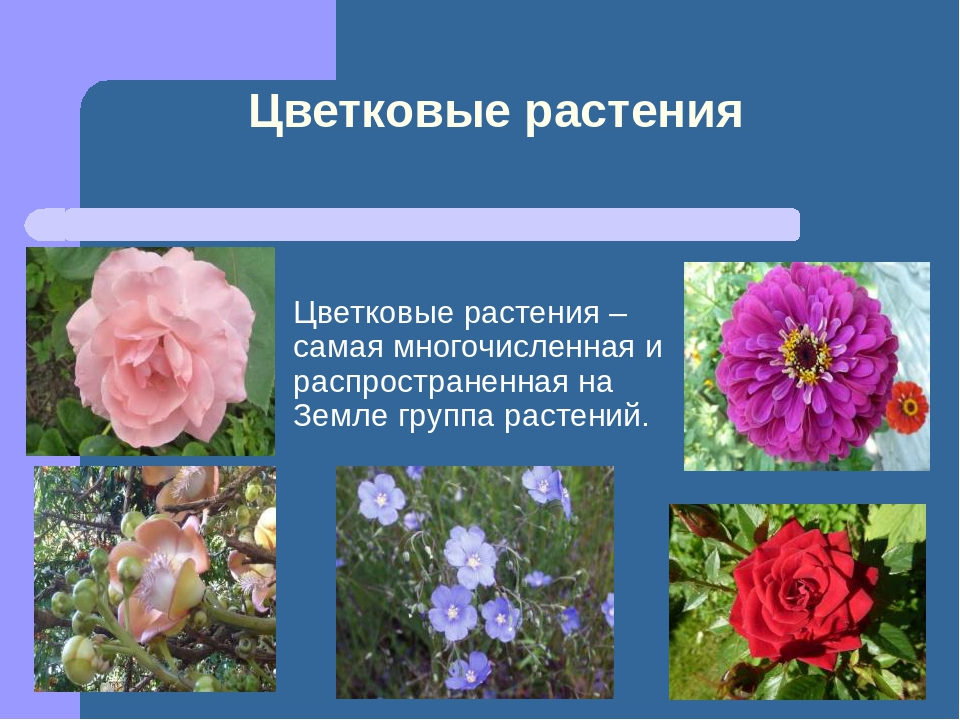 все картинки и название цветковые пыталась