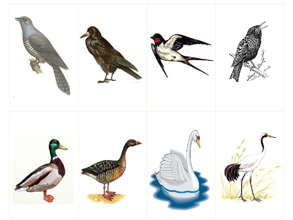 этом игры на тему перелетные птицы картинки текст