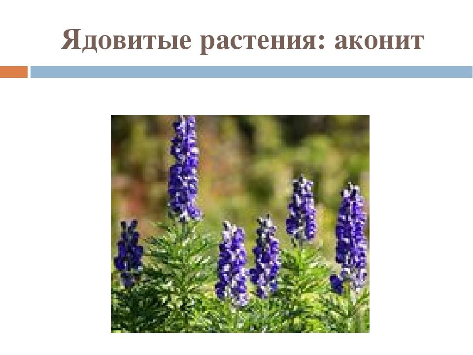 Ядовитые растения: аконит