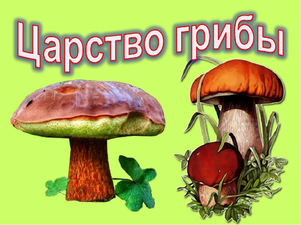 Рисунок царство грибов