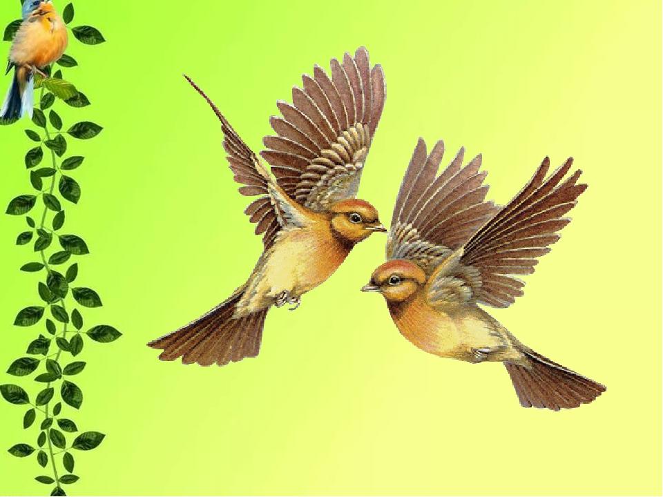 картинки птица родного края смысл