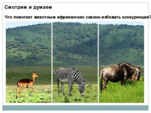 Смотрим и думаем Что помогает животным африканских саванн избежать конкуренции?
