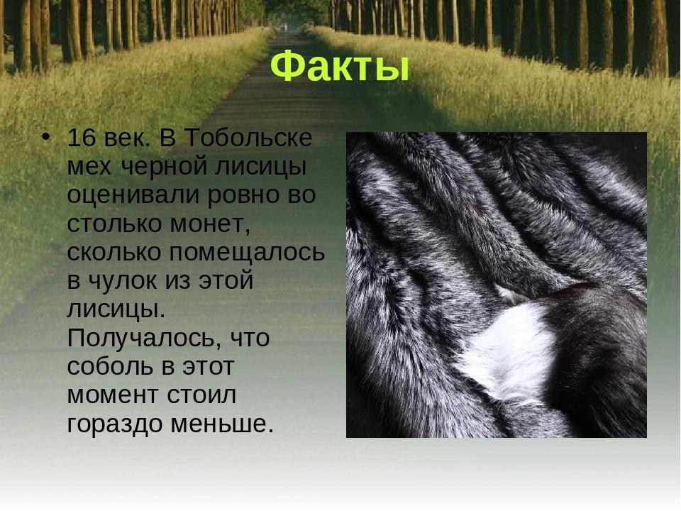 Факты 16 век. В Тобольске мех черной лисицы оценивали ровно во столько монет,...