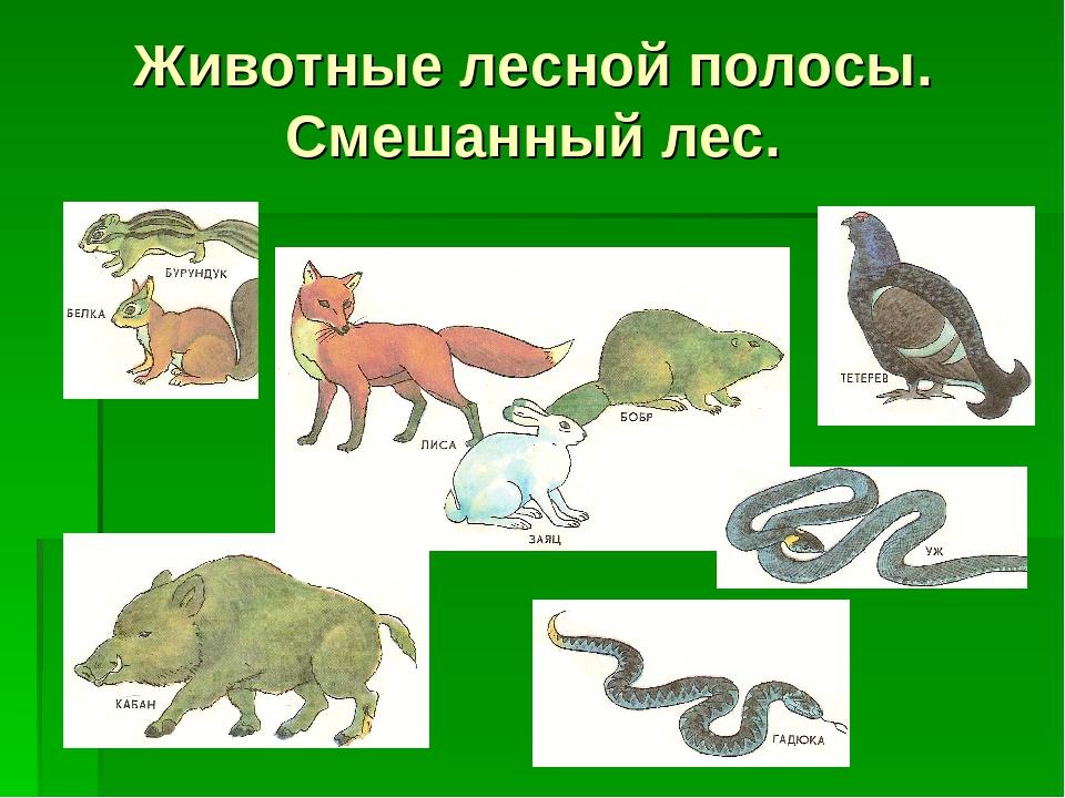 хотите получить картинки смешанных лесов животные и растения проверяет школу