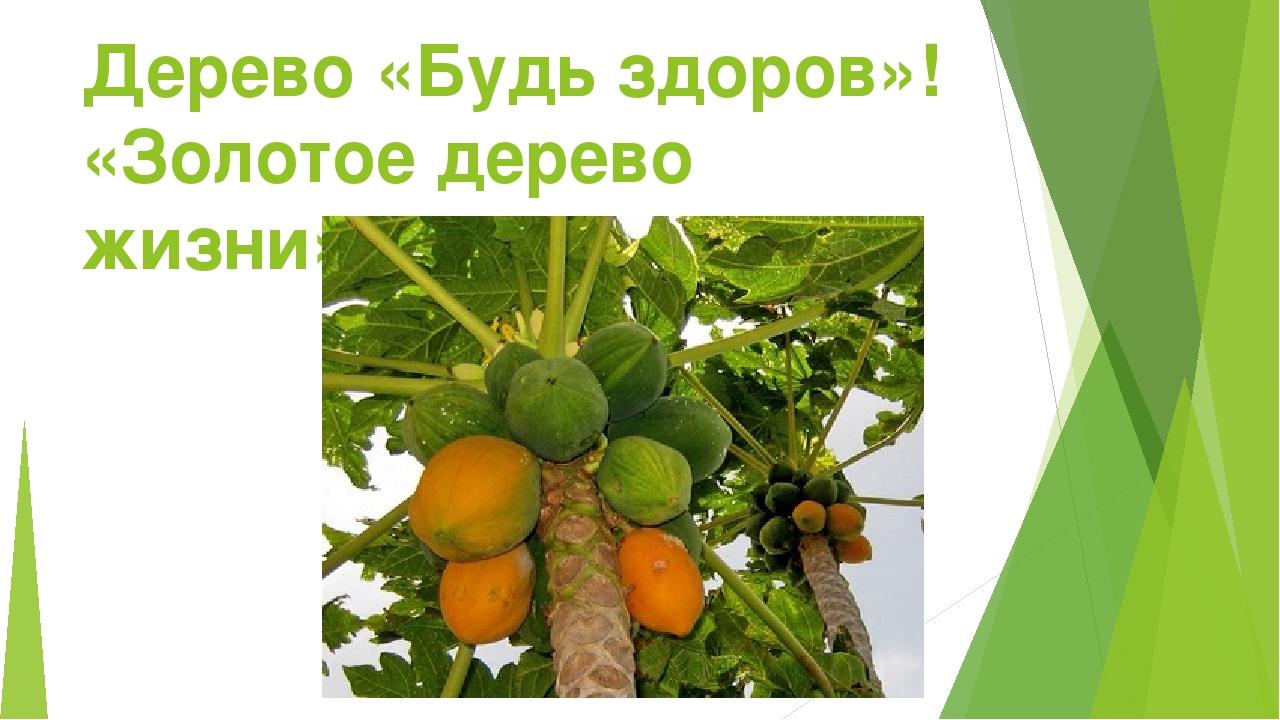 Дерево «Будь здоров»! «Золотое дерево жизни» - Папайя