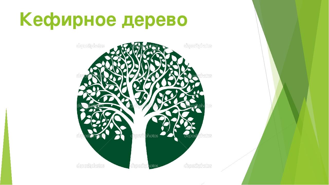 Кефирное дерево