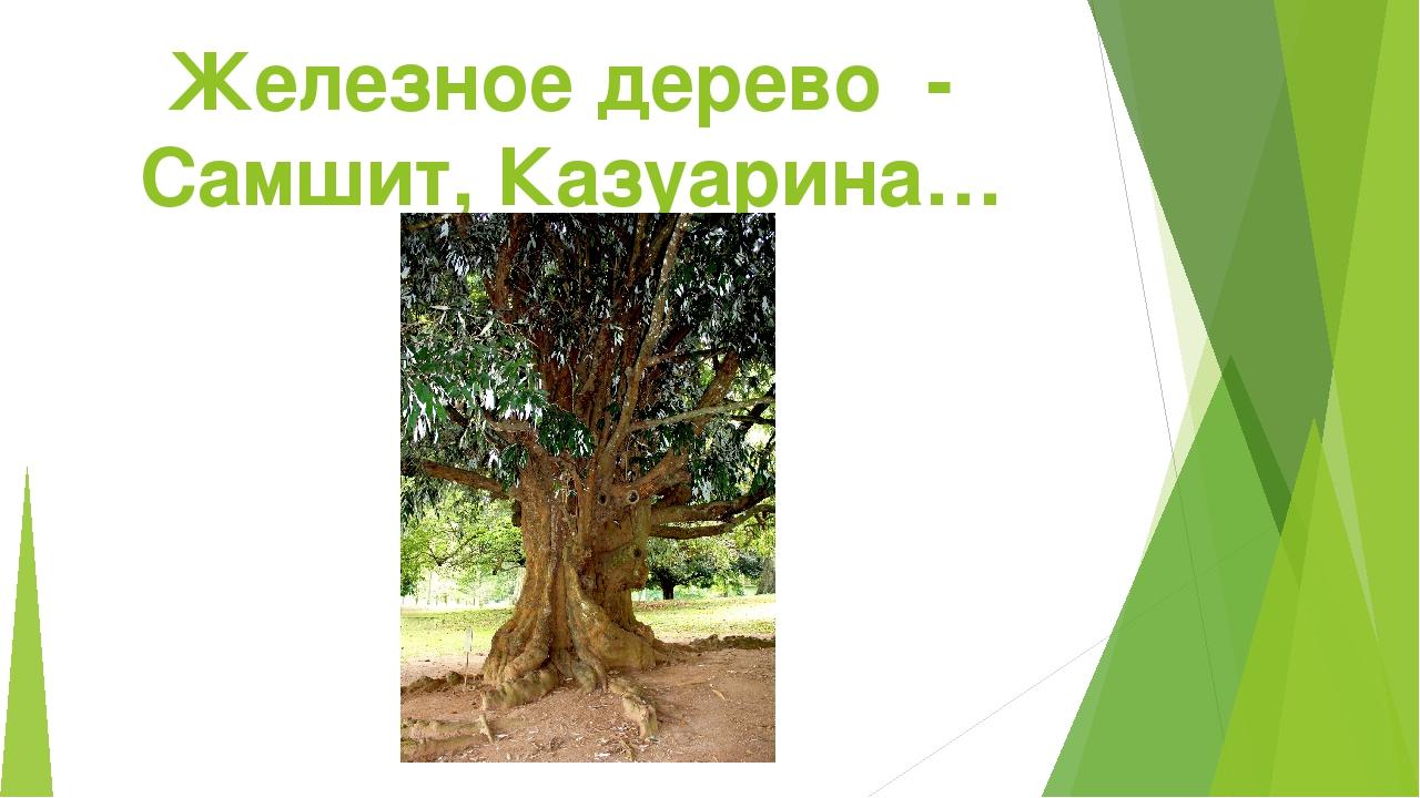 Железное дерево - Самшит, Казуарина…