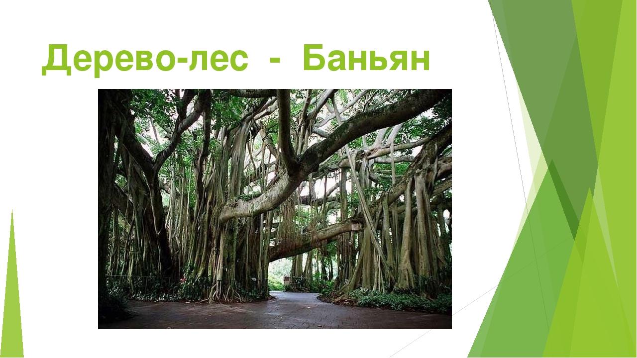 Дерево-лес - Баньян