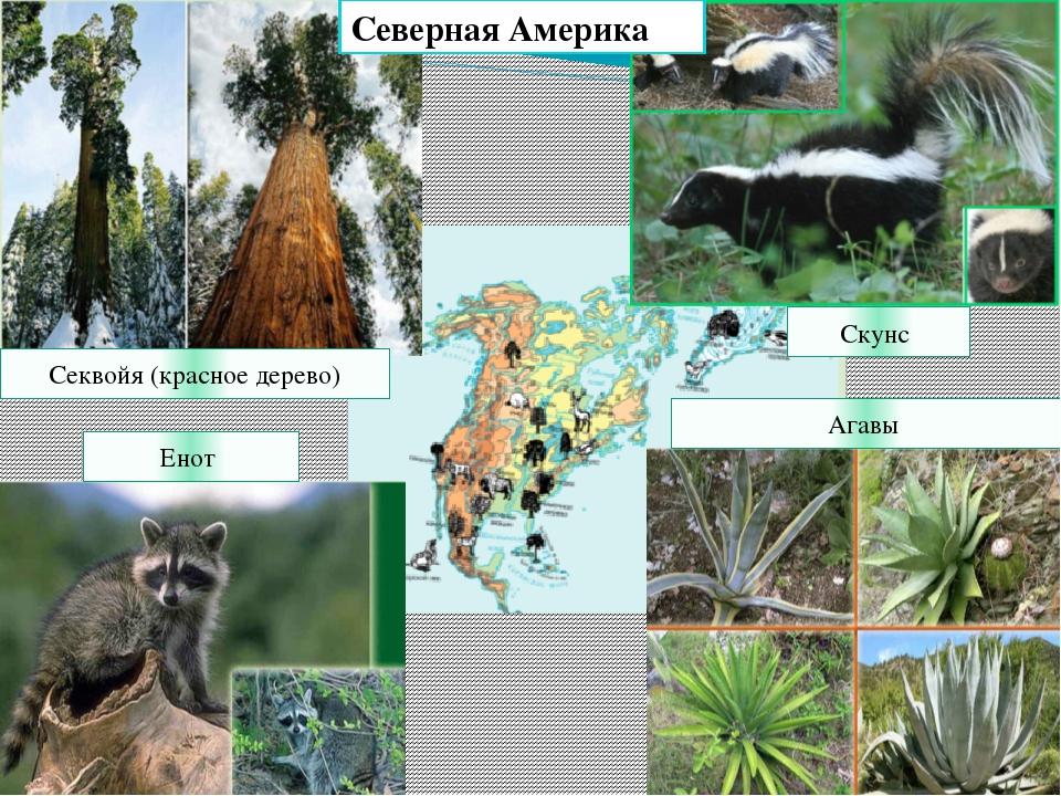 загвоздка растения северной америки фото с названиями ответила воздушными наземными