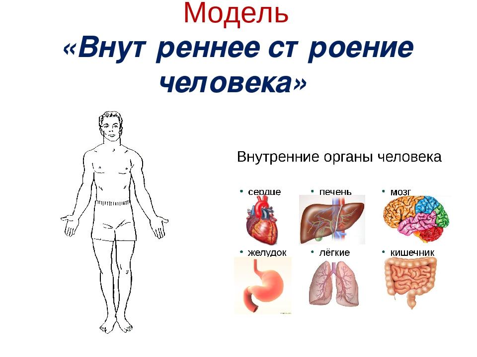 Картинки на тему внутреннее строение человека