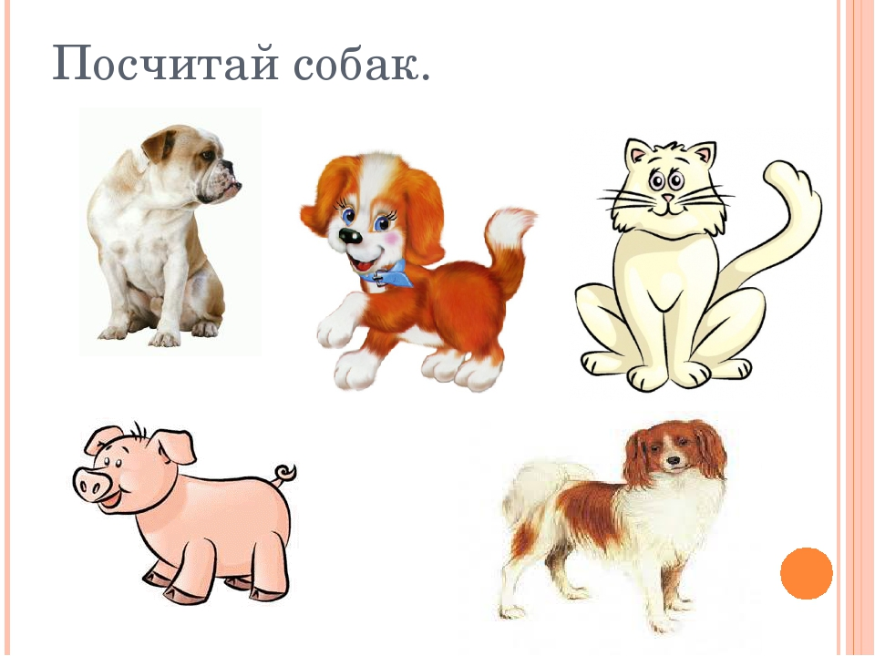 Посчитай собак.