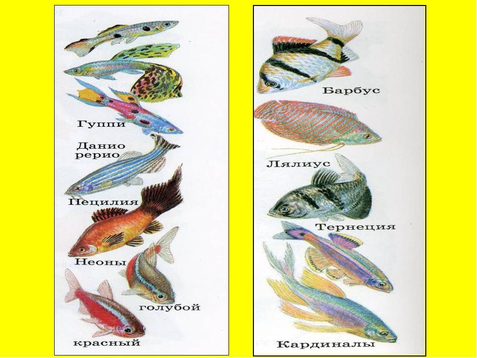 Все названия и картинки аквариумных рыбок